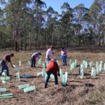 Saving the Endangered Cumberland Plain Woodland